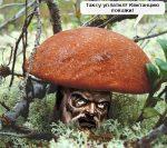 Новый побор в Белоруссии: налог на сбор грибов, ягод исенокошение