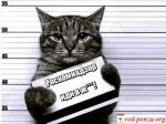 В России готовят законопроект о запрете анонимайзеров иVPN-сервисов